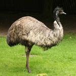 pixwords antworten EMU
